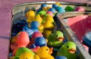 Image Pêche aux canards